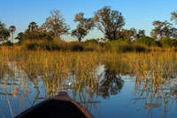Landscape photographed from a boat during aquatic safari mokoro canoe made starting from mokoro call Eagle Island Camp by Orient Express Camp, outside the Moremi Game Reserve in Botswana. Before starting, safety measures in case of an unwanted encounter with hippos, buffaloes, lions ... Our local guide that we followed in James to single file, stopping to explain each fingerprint, every bone, every turd and every path were finding. It was like slowly sweep the ground in search of our prey. At the safari we saw a variety of animals, since in those rainy months are scattered remote areas. Oddly enough, the Okavango Delta level is low during the summer rainy season and high in the dry winter. This is because the mass of water drained from the delta, arriving from Angola about six months after he had fallen. That is, water that is raining in the mountains of that country during November to March takes the time to travel the 1,000 km due to the unevenness of only 60m. Before starting the 2 hour hike we saw a fire at a nearby island that would accompany us during the three days. We arrived at the camp with the sun already set, time that hippos began their activity. Dinner was better but still, with food not play. Although our 3 guides told us that the fire could not reach because it separates a channel, I was not all me to sleep peacefully. I would have about 500 meters and at night you could hear burn as if on the same side. Being completely covered channels of vegetation, giving the feeling of uneasiness, that there was no separation between that area and our own. On Monday, following the advice of our guide-leader, we got up at 5:30 am for some breakfast and go to the mokoro to another place, where we would do the next safari. This was the safari which justified the money spent. It lasted four hours and saw zebras, wildebeest, elephants, a group of over 20 giraffes, hippos, ... and so on foot, with no barrier between animals and us. The only bad thing was the intense heat that made those three days, it was horrible. At the turn of safari, James left the leadership to his two young apprentices, who were we also chanting the name of all that is moving our way. Must see as animal life, the less we can be dangerous for them to walk, the more scared and keep their distance. We smelled and remained with her until she ran to get away. But just going with zebras that huge group of giraffes.