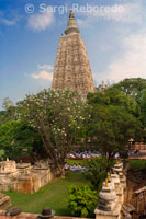 Mahabodhi Temple In Bodhgaya. The Mahabodhi Temple Complex is one of the four holy sites related to the life of the Lord Buddha; and particularly to the attainment of Enlightenment. The first temple was built by Emperor Asoka in the 3rd century B.C.; and the present temple dates from the 5th or 6th centuries. It is one of the earliest Buddhist temples built entirely in brick; still standing in India; from the late Gupta period. The Mahabodhi Temple; one of the few surviving examples of early brick structures in India; has had significant influence in the development of architecture over the centuries. balustrades; and the memorial column. The present temple is one of the earliest and most imposing structures built entirely from brick in the late Gupta period. The sculpted stone balustrades are an outstanding early example of sculptural reliefs in stone. The Temple Complex has direct associations with the life of the Lord Buddha (566-486 BC) as the place where in 531 BC he attained the supreme and perfect insight while seated under the Bodhi Tree. It provides exceptional records for the events associated with his life and for subsequent worship; particularly since Emperor Asoka made a pilgrimage to this spot around 260 BC and built the first temple at the site of the Bodhi Tree. The Mahabodhi Temple Complex is located in the very heart of the city of Bodh Gaya. The site consists of the main temple and six sacred places within an enclosed area; and a seventh one; the Lotus Pond; just outside the enclosure to the south. The most important of the sacred places is the giant Bodhi Tree (Ficus religiosa ). This tree is to the west of the main temple and is supposed to be a direct descendant of the original Bodhi Tree under which the Buddha spent his First Week and where he had his enlightenment. To the north of the central path; on a raised area; is the Animeshlochan Chaitya (prayer hall) where the Buddha is believed to have spent the Second Week. The Buddha spent the Third Week walking 18 paces back and forth in an area called Ratnachakrama (Jewelled Ambulatory); which lies near the north wall of the main temple. The spot where he spent the Fourth Week is Ratnaghar Chaitya; located to the north-east near the enclosure wall. Immediately after the steps of the east entrance on the central path there is a pillar which marks the site of the Ajapala Nigrodh Tree; under which Buddha meditated during his Fifth Week; answering the queries of Brahmins. He spent the Sixth Week next to the Lotus Pond to the south of the enclosure; and the Seventh Week under the Rajyatana Tree currently marked by a tree. The Main Temple is built in the classical style of Indian temple architecture. It has a low basement with mouldings decorated with honeysuckle and geese design. Above this is a series of niches containing images of the Buddha. Further above there are mouldings and chaitya niches; and then the curvilinear shikhara or tower of the temple surmounted by amalaka and kalasha (architectural features in the tradition of Indian temples). At the four corners of the parapet of the temple are four statues of the Buddha in small shrine chambers. A small tower is built above each of these shrines. The temple faces east and consists of a small forecourt in the east with niches on either side containing statues of the Buddha. Next to the Bodhi Tree there is a place with a Buddha statue that stands on part of the polished sandstone Vajrasana (Diamond Throne); originally installed by Emperor Asoka to mark the spot where the Buddha sat and meditated. Granite pillars were added to enlarge the area in the 5th-6th centuries BC. Further up the central path towards the main temple to the south is a small shrine with a standing Buddha in the back and with the footprints (Padas ) of the Buddha carved on black stone; dating from the 3rd century BC; when Emperor Asoka declared Buddhism to be the official religion of the state. Further on the path towards the main temple is a building housing several statues of Buddha and Bodhisattvas. Opposite is a memorial to a Hindu Mahant who had lived on this site during the 15th and 16th centuries. To the south of the pathway is a cluster of votive stupas built by kings; princes; noblemen and lay people.