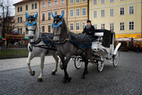 Carroaje horse drawn tour in the Old Town Square. The Old Town Square. The Old Town Square is one of the nicest places in Prague. Cozy and old, the square is surrounded by interesting streets why it is a real pleasure to walk. The square is full of interesting buildings most notably the Church of Our Lady of Tyn, St. Nicholas Church and the Old Town Hall. Church of Our Lady of Tyn Built in the fourteenth century on an old Romanesque church, the Church of Our Lady of Tyn (Kostel Matky Bozi p? Ed Týnem) is an impressive late Gothic church with two towers of the sharp dominate the skies over Prague.