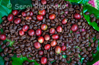 The special coffee Gesha variety produced in the Valle del Cauca was chosen among the ten best in the world. Coffee grounds and others who have not been roasted in the coffee. The coffee is not only the site where there is half the exquisite Colombian coffee, but is also the second tourist destination of Colombia, after the Atlantic coast. The three departments that make it up-Caldas, Risaralda and Quindio ecoregion-up a beautiful wavy green mountains, where the coffee is just dotted with simple accommodations and exciting recreational places. About 300 farms offer accommodation in the area. Many are in operation, and several have received an award from the Coffee Club Estates: one or two grains that double stars. Some retain the colonial facades and offer rides for their crops of coffee and nuts, which are then transformed into delicious dishes and refreshments. Nature seems endless until one or other population obstructs the view. These obstacles are, respectively: Manizales, the center of academia and culture; Pereira, owner of the trade and nightly entertainment, and Quindio main target area for its tourism and environmental stress. For Quindío let's start, because there are theme parks and coffee farming culture, the infallible promise of fun. The Coffee Belt  The coffee belt, caller Triangle Café is also a topographic region of Colombia, in its expanse comprendida them Departamentos fear of Caldas, Risaralda, Quindio, the northeastern region of the department of Valle del Cauca, all of the region southwest of Antioch and the north-West of Tolima. Hace part of the region known as the Colombian Paisa Region, the cities and capital cities of the three mentioned above are primeros Departamentos Manizales, Pereira and Armenia respectively and in divididas ejes temáticos. Pereira: Financial and Business Development. Manizales: Cultural and Educational Development. Armenia: Tourist and Ecological Development. Was this region a significant producer of rubber in the twentieth century but then comienzos be more dedicated to coffee, one of the most important centers in the importation and redistribution of fabrics or goods in Europe. The very group of traders activities that encourage, yet years later they would be late boost industrial development in the area. The cultural landscape of Colombia coffee It was declared a World Heritage Site by UNESCO in 2011.1 Index [hide] 1 History of Coffee 2 Generalidades Creativo Turismo 3, modern 4 tourist attractions 5 Véase also 6 References 7 links externos History of Coffee    Coffee crops in Risaralda Comenzo to be commercially grown in the coffee beans in Colombia Salazar de las Palmas, Norte de Santander and during the twentieth century university was the primary producto dentro de las colombianas exports. In 1999 represented 3.7% of the national Gross Domestic Product and 37% of agricultural employment. Departamentos the major producers of coffee are: Nariño, Norte de Santander, Antioquia, Valle del Cauca, Huila, Tolima, Caldas, Risaralda, Quindio and Cundinamarca.